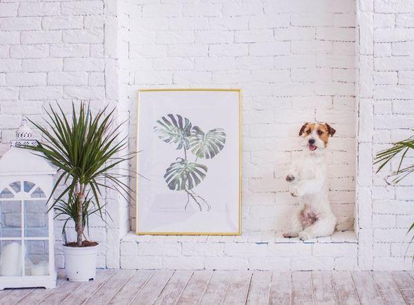 Evcil Hayvan Besleyenler İçin Dekorasyon