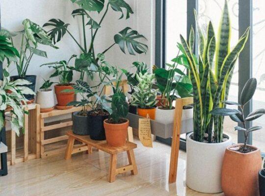 iç mekan bitkileri